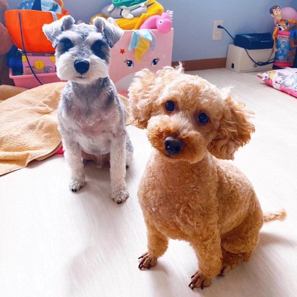 はねまりファミリーの愛犬レオ&ココ
