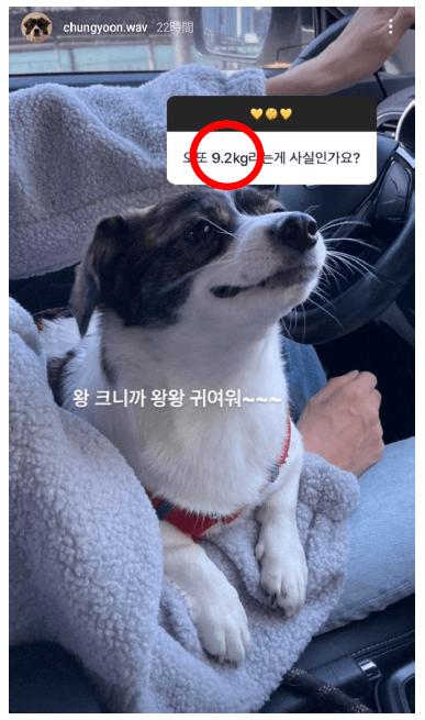 ヒチョと美人作曲家の匂わせその③:『犬の体重』